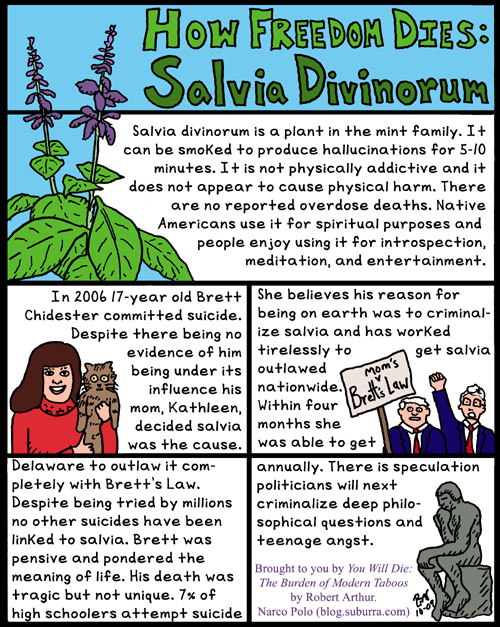 Salvia Divinorum and Freedom